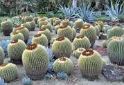 Alien pods looking for the mothership, not cacti