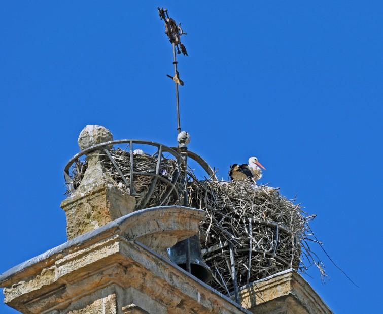 a huge metal basket provided for the storks to nest?