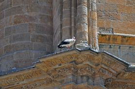 on one of the churches of Salamanca