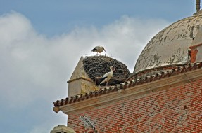 this nest is so large, it dwarfs the little stork