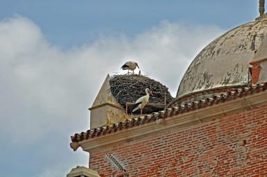 this nest is so large, it dwarfs the little stork