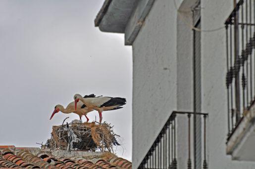 whoever lives here should set up a stork-cam