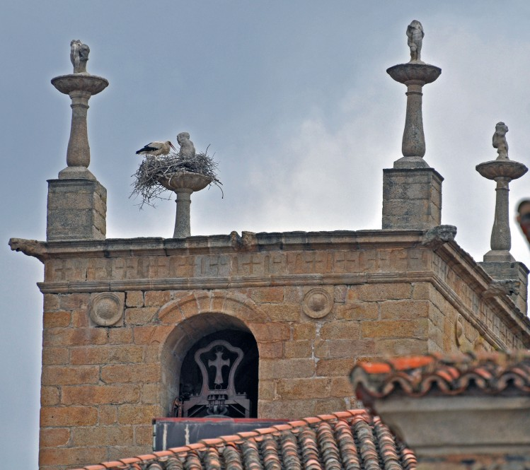 stork making do with ornamental pillar for its nest
