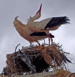 stork stretch