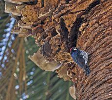 Palm tree condo
