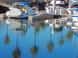 palm trees next to docks