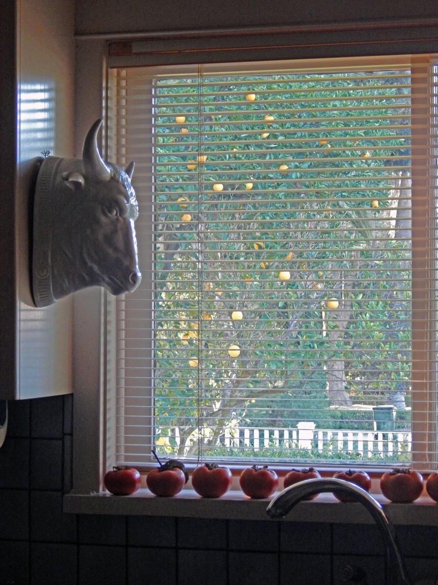 kitchen window persimmons