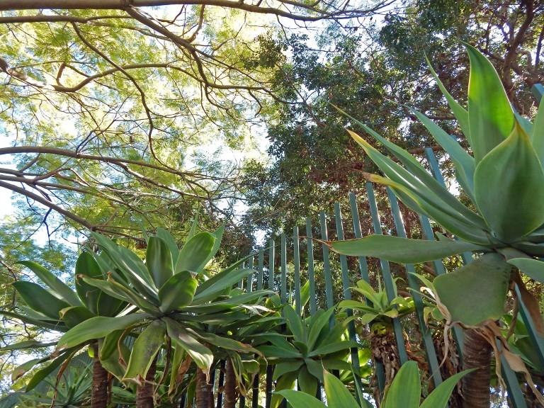 LACMA fence