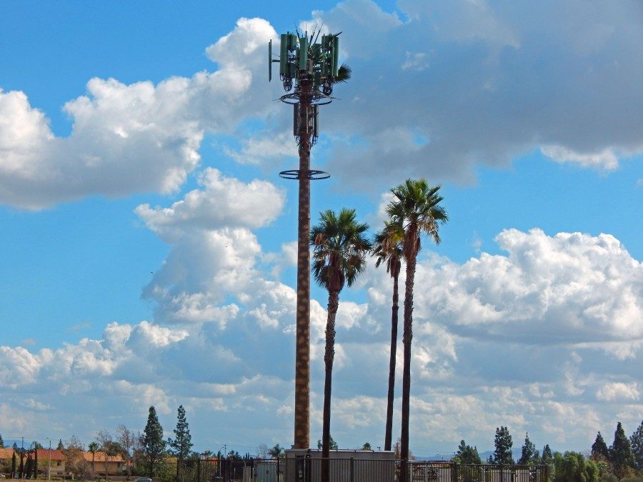 palm tree tower