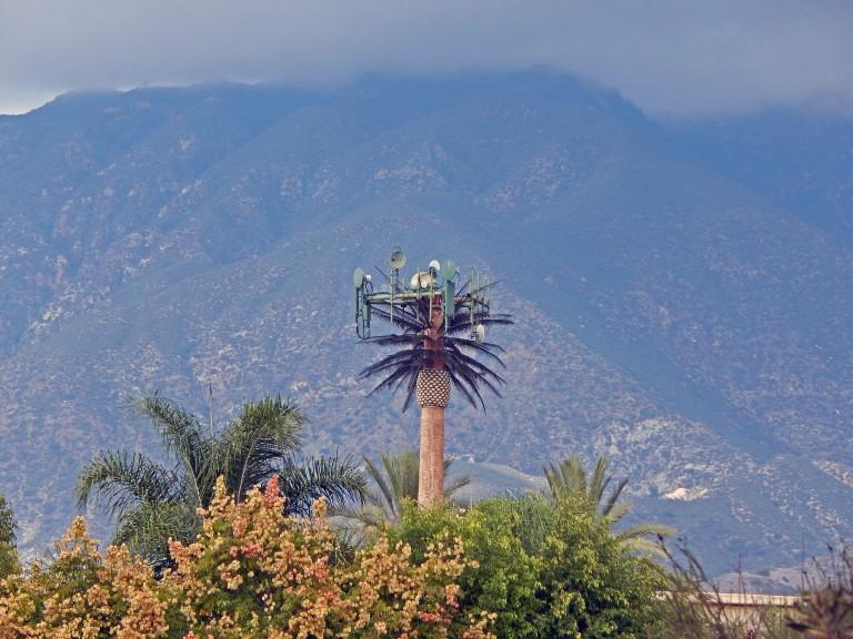 palm tree tower2