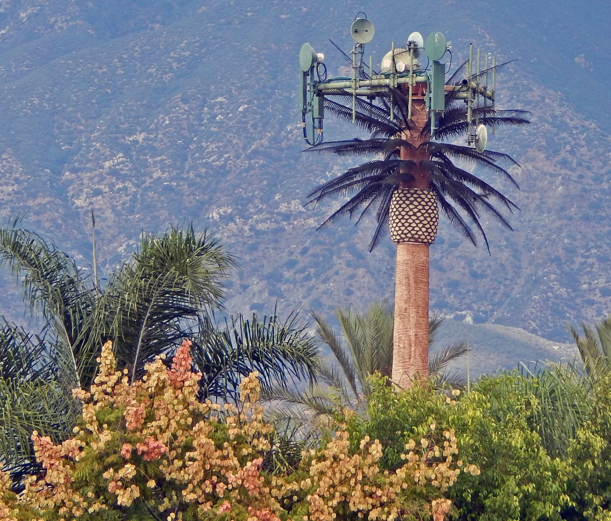 palm tree tower2_crop