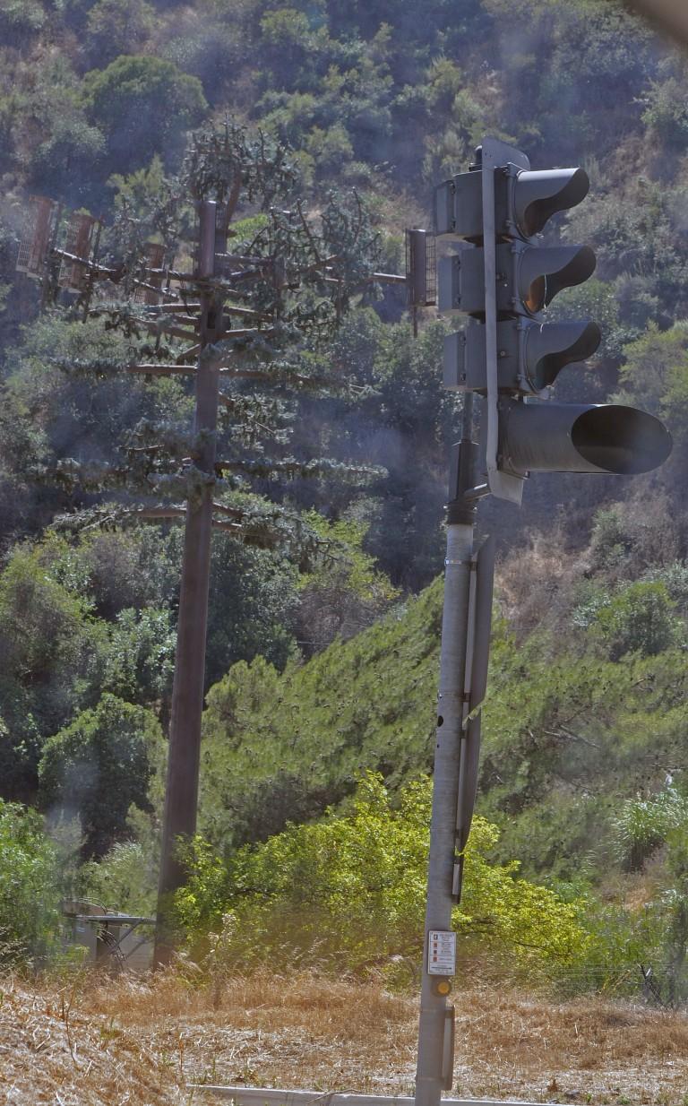 pine tree tower2