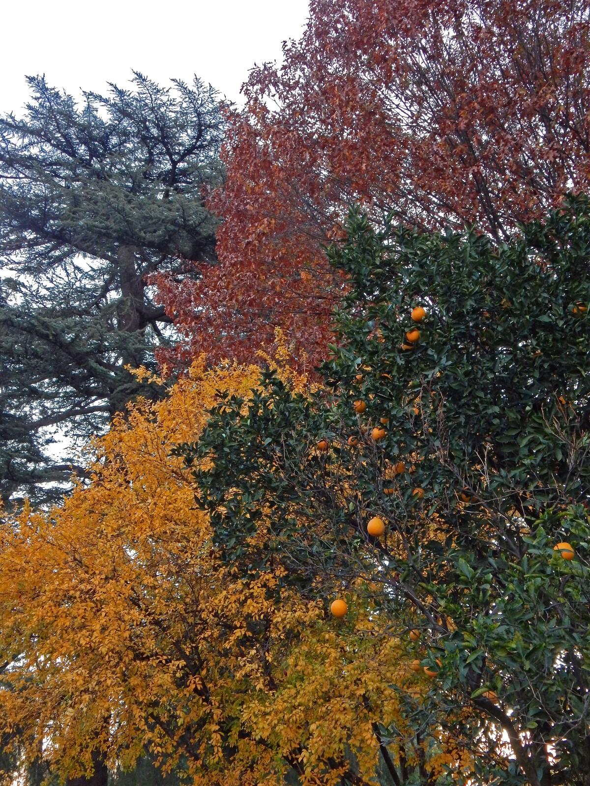 pomegranate orange elm